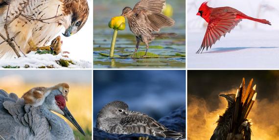 Audubon argazki-lehiaketa 2021