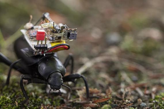 GoPro kamerak benetako intsektu eta mikrorobotentzat