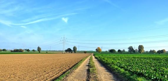 Nekazaritza ekologikoa vs. konbentzionala: zein hobea ingurumenarentzat?