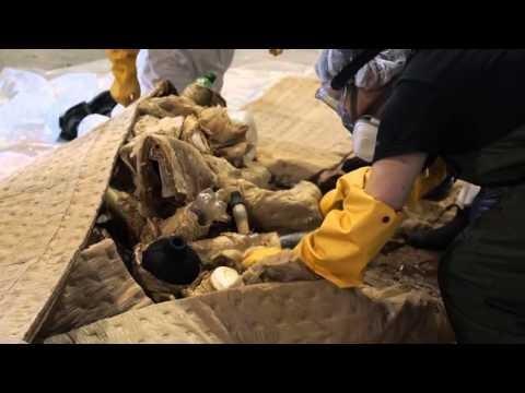 Nola gorde balea urdin baten 200 kg-ko bihotza zure museoan? [BIDEOA]