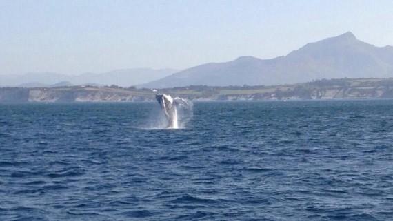 Balea konkorduna jolasean asteburuan Hondarribi parean