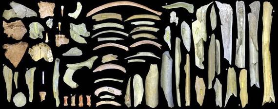 Europako iparraldeko neandertal kanibalak, gertutik
