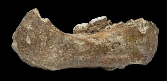Denisovatik kanpoko lehen denisovar fosila agertu da Tibeten