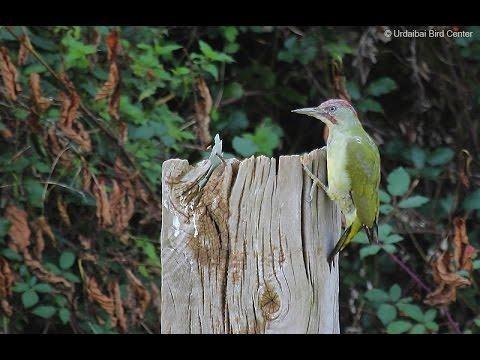 2017ak utzitakoaren laburpena Urdaibaiko Bird Centerren