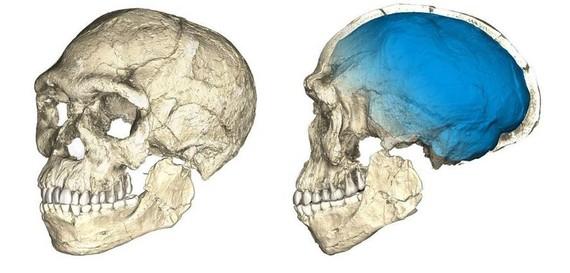 Aurkikuntza berriak Homo Sapiens-aren antzinatasun afrikarra frogatzeko