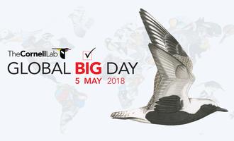 Global Big Day 2018+