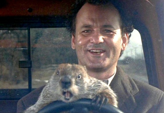 marmota bill murray