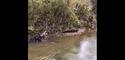 Krokodiloa Ormaiztegin Luki txakurrarekin